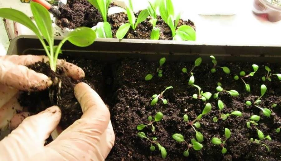 Что можно посадить в январе на рассаду